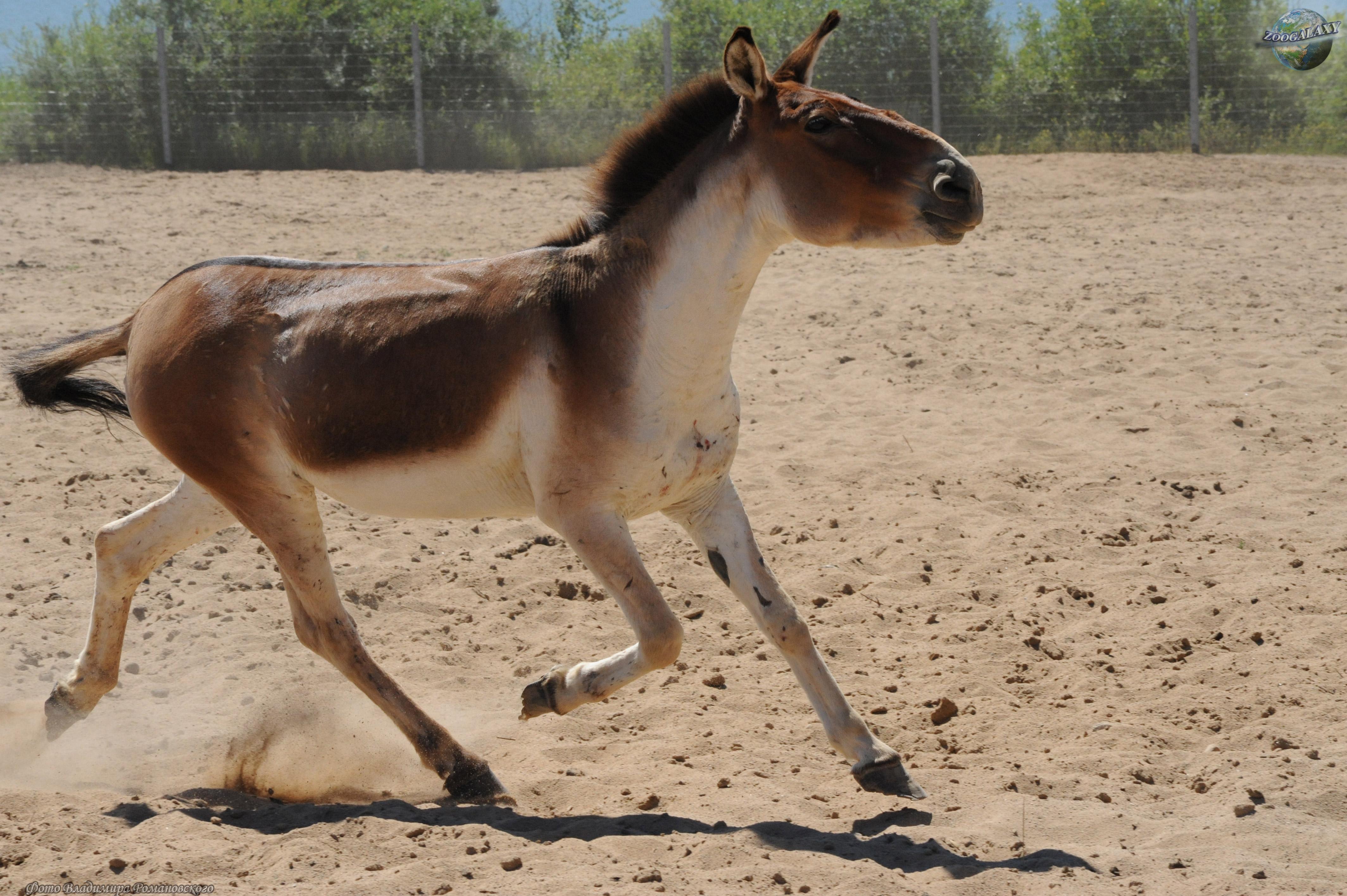 equus wikipedia
